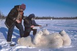 Polar Bear Research, Canadian Arctic