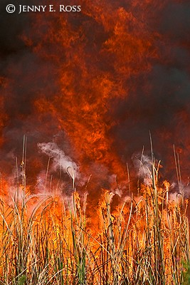 Controlled Burn for Habitat Management