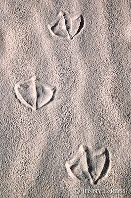 Albatross Tracks